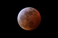 Super Blood Wolf Moon (mhawkins) Tags: moon bloodmoon eclipse superbloodwolfmoon