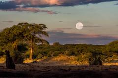 Full Moon at Camp _5284 (hkoons) Tags: chobenationalpark senyaticamp southernafrica fullmoon africa botswana aqueous bathing cleaning dip moon pond wash washing water