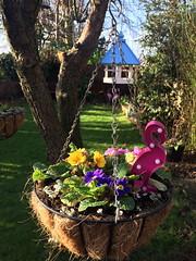 Winter colour (markshephard800) Tags: pink flamingo flowers fleurs blumen bloemen fiori flores flora tree arbre baume garden garten jardin jardim tuin giardino art birdhouse basket planter primula