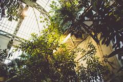 GLASSHOUSE VI (DASxTESAPECK) Tags: dark plant pflanze light bokeh natur gewächshaus glasshouse color colour darkgreen green focus fokus kassel wilhelmshöhe winter stimmung nature