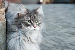 Doberaner Mitze-08772 (Marko's_Art) Tags: cat haustier tier katze kätzchen outside deutschland germany norddeutschland nordwestmecklenburg mecklenburgvorpommern