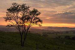 AURORA (mara.arantes) Tags: landscape paisagem tree sunrise sky rural field light mountain