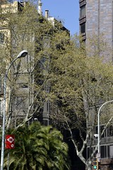 TORRE URQUINAONA (Yeagov_Cat) Tags: 2019 barcelona catalunya torreurquinaona urquinaona torre plaçaurquinaona carrerrogerdellúria carrerausiàsmarch 19681970 196870 antoniboneticastellana carrerderogerllúria plaçadurquinaona