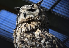 Zoo day (taylorwilkinsonblake) Tags: wildlife animals zoo bird owl