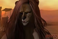 ASAD - breed (Alea Lamont) Tags: ndmd lion male skin applier omega bento mesh head catwa daniel nomatch whiskers ears leo eyes fantasy faire 2019