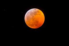 Super Blood Wolf Moon (Tom Fenske Photography) Tags: eclipse moon super blood wolf full orange astrophotography night sky monochrome