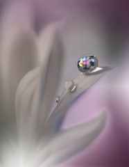 ~*~*~ (Juliana Nan) Tags: macro magic magicbackground amazing abstract artistic art artwork artofflowers artdesign closeup colors colorful multicolored violet white waterdropsmacros drop droplet dreamy nature natural background wallpaper beautiful beauty creative aesthetic pure purity clean freshness fresh fragility reflection refraction water fineart transparent tranquil