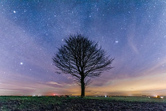 Night tree (Andy barclay) Tags: tree trees louth lincolnshire uk night nightscape sky nightsky stars star galaxy milkyway clouds cloudy cold winter silhouette field landscape long exposure nikon d7100 35mm 35mm18g