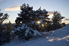 Last of the Winter Sun (steve_whitmarsh) Tags: aberdeenshire scotland scottishhighlands highlands craigendarroch winter snow mountain hills trees forest cairngorms topic abigfave