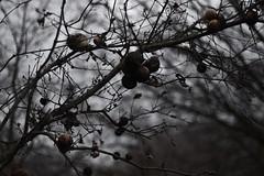 Orbs (SkylerBrown) Tags: creepy dark delta deltameadowsriverpark forest nature overgrown path spring trees winter