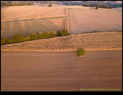 180917-0948-MAVICP-HDR.JPG (hopeless128) Tags: 2018 france eurotrip road tree fields poursac charente fr