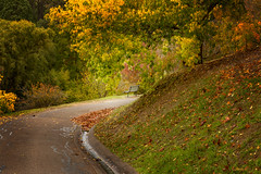 Autumn is round the corner.. (dmunro100) Tags: autumn adelaide adelaidehills southaustralia mountloftybotanics