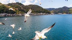 DSC01304 (Neo 's snapshots of life) Tags: japan 日本 京都 kyoto amanohashidate 天橋立 あまのはしだて sony a73 a7m3 24105 伊根