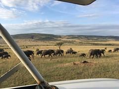 IMG_1518 (suuzin) Tags: masai mara safari