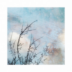 Pastel sky. (jeanne.marie.) Tags: winter branches silhouettes mydailywalk iphone7plus iphoneography textured sky pastel
