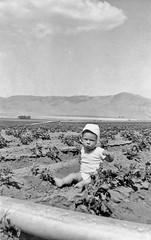 Potato Farm (Timothy Lewis Jr.) Tags: analoguefilm film blackandwhite blackandwhitefilm bw kodakbrownie farm