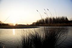DSC06430 (janjanny) Tags: 2012 delftsehout fromaperture landscapes places seasons wildlifeandlandscapes winter