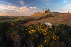 Dunstanburgh Gold (ttarpd) Tags: dunstanburgh castle northumberland beach embleton bay north east england uk coast sea water rock shore tide seascape landscape sunset sundown sundowner dusk twilight eventide