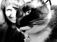 Me & Izzy2 B&W (Donna's View) Tags: cellphone phonepic cat selfie siamesecat photoshop photoshopapp bw blackandwhite