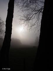 Dank and atmospheric (mark.griffin52) Tags: olympusem5 england olympus hertfordshire ashridgeestate countryside woodland forest trees sun mist
