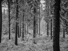 Forest trip  #Finland #nature #forest #trees #winter #snow #white #cold #wild #environment #blackandwhite #bnw #bnwphotography #bnw_captures #bnwmood #bnw_life #bnw_planet #bnw_greatshots #monochrome #outdoors #photography #olympus #travel #traveling #vis (Zilvinas Degutis) Tags: forest visiting olympus winter cold trees bnwlife white blackandwhite bnwgreatshots bnwcaptures nature bnw traveling instago instatravel environment bnwplanet outdoors bnwmood snow finland monochrome bnwphotography travel wild photography
