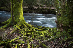 Mossy Roots and the River (Christian Hacker) Tags: riverteign dunsfordnaturereserve dartmoor nationalpark longexposure devon roots moss mossy river stream watermovement trees outandabout forest woodland nature green water