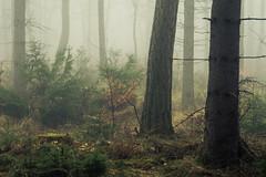 The heart of the fog (Netsrak) Tags: baum bäume eu eifel europa europe forst landschaft natur nebel rheinland rhineland wald fog forest landscape mist nature outdoor trees winter woods