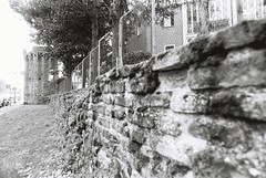 Rimini (goodfella2459) Tags: nikonf4 afnikkor24mmf28dlens cinestillbwxx 35mm blackandwhite film analog rimini italy trees wall grass bwfp manilovefilm