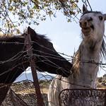 Horses are beautyful thumbnail