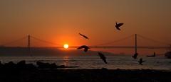 Lisboa sunset 1 (chriskatsie) Tags: pont bridge lisbonne portugal lisbon tage river riviere oiseau bird sun soleil landscape sunset