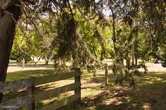 190128 102805 (Vibeke Friis) Tags: martinborough wellingtonregion newzealand nz