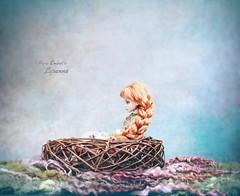The nest ⛵️ (pure_embers) Tags: pure laura embers porcelain bjd doll dolls england uk girl olgakirillova scarlett pureembers lysanne emberslysanne photography photo ball joint portrait fine art ginger hair ovkstudiodolls whimsical fantasy scene magical world nest tranquility boat dreamy