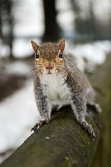 squirrel (Mary Bassani) Tags: squirrel bosque ardilla scoiattolo italy portrait lookatme animalplanet animallovers canonphotographer canon wildlife wildlifephotographer naturewildlifephotographer naturaleza fauna