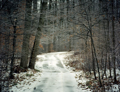 (toulouse goose) Tags: film kodak portra 400 mamiya 645 e 120 sekor150mm35 mediumformat c41 homedeveloped epson v500 winter forest