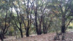Un Otoño de colores (pedroramfra91) Tags: autumn otoño bosque wood exteriores outdoors arboles trees