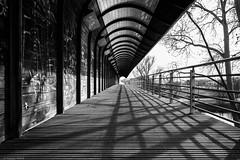 La bonne voie.... (mitch6778) Tags: street urban urbain strasbourg bw