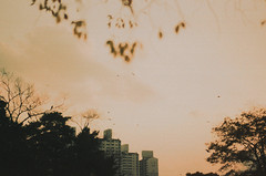 .to stay. (Camila Guerreiro) Tags: film expiredfilm kodak ektachrome 400 analog camilaguerreiro seoul southkorea pentaxmesuper expired grain sunset