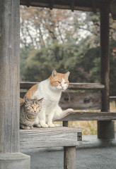 together (tomomichi_ito) Tags: cat animal japanesepaper