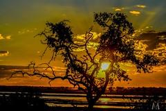 Sunset, Chobe Botswana (SuzieAndJim) Tags: suzieandjim naturephotography nature botswana chobe colours colors sunset