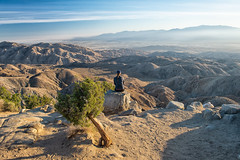 untitled (96 of 125).jpg (xen riggs) Tags: desert california joshuatreenationalpark february2018