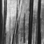 Thoreau | 2 (Civil disobedience) thumbnail