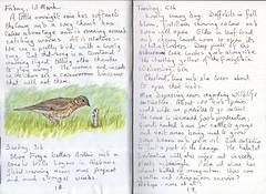 Thrush (Hornbeam Arts) Tags: bird worm garden extinction
