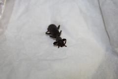 Cerambycidae Longicorn Beetle IMG1135 (Bill & Mark Bell) Tags: geo:town=exmouth geo:state=westernaustralia geo:country=australia geo:lon=11425453egeolat2217752sgeoalt8m taxonomy:kingdom=animalia taxonomy:phylum=arthropoda taxonomy:class=insecta taxonomy:order=coleoptera taxonomy:family=cerambycidae taxonomycommonnamelongicornbeetle beetle