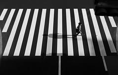 (cherco) Tags: happyplanet asiafavorites pasodecebra tokyo japan man repeticion blackandwhite monochrome blancoynegro alone lonely walking city canon canoneos5diii urban shadow silhouette road traffic trafficlights person pedestrian pedestriancrossing
