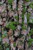 Bark (SReed99342) Tags: bark tree lichen moss florida lutz violetcurypreserve hillsboroughcounty