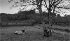 caballo_san tome de piñeiro_08_03_2019 (maxnemo) Tags: maxnemo caballo horse cavallo animal animale
