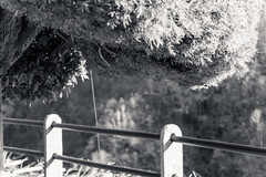 Vogorno (fotoquotidian) Tags: tessin vogorno springtime eveninglight fotoquotidian nikond500