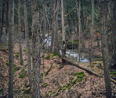 A Beauty in the Drab (Paul B0udreau) Tags: nikkor70300mm photoshop canada ontario paulboudreauphotography niagara d5100 nikon nikond5100 raw layer grimsby hugin panoramic beamer forest creek water brown trees
