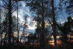 Beautiful Monday Evening. (dccradio) Tags: lumberton nc northcarolina robesoncounty outdoor outdoors outside nature natural sky tree trees woods wooded forest march monday spring springtime evening mondayevening goodevening nikon d40 dslr settingsun sunset sunlight sun sunshine cloud clouds
