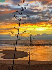Playa del Palmar-Cádiz (Pontius Pilatuss) Tags: playa beach nubes clouds paisaje landscape agua water nature naturaleza atardecer sunset colors colores palmar vejer cadiz andalucia andalusie andalousie andalusia